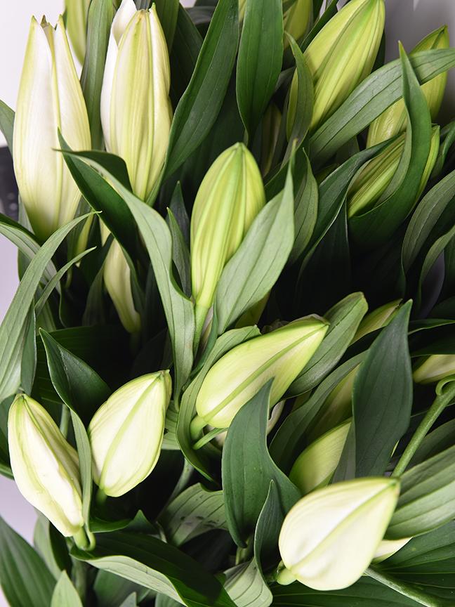 Lillium Casablanca Wholesale Flowers Cut Flowers