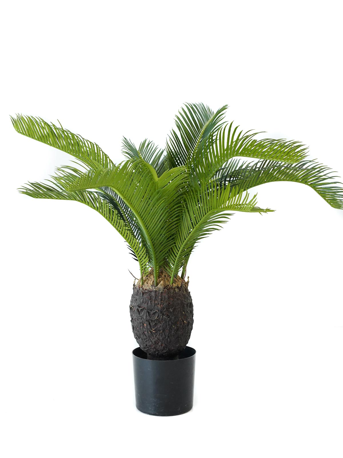 Baby Cycus Plant Artificial Plants Trees