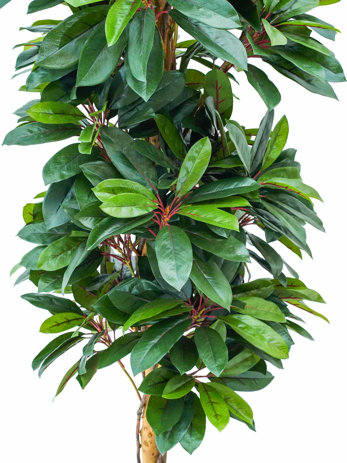 Red Lady Schefflera Natural Tree Large Artificial Plants Trees