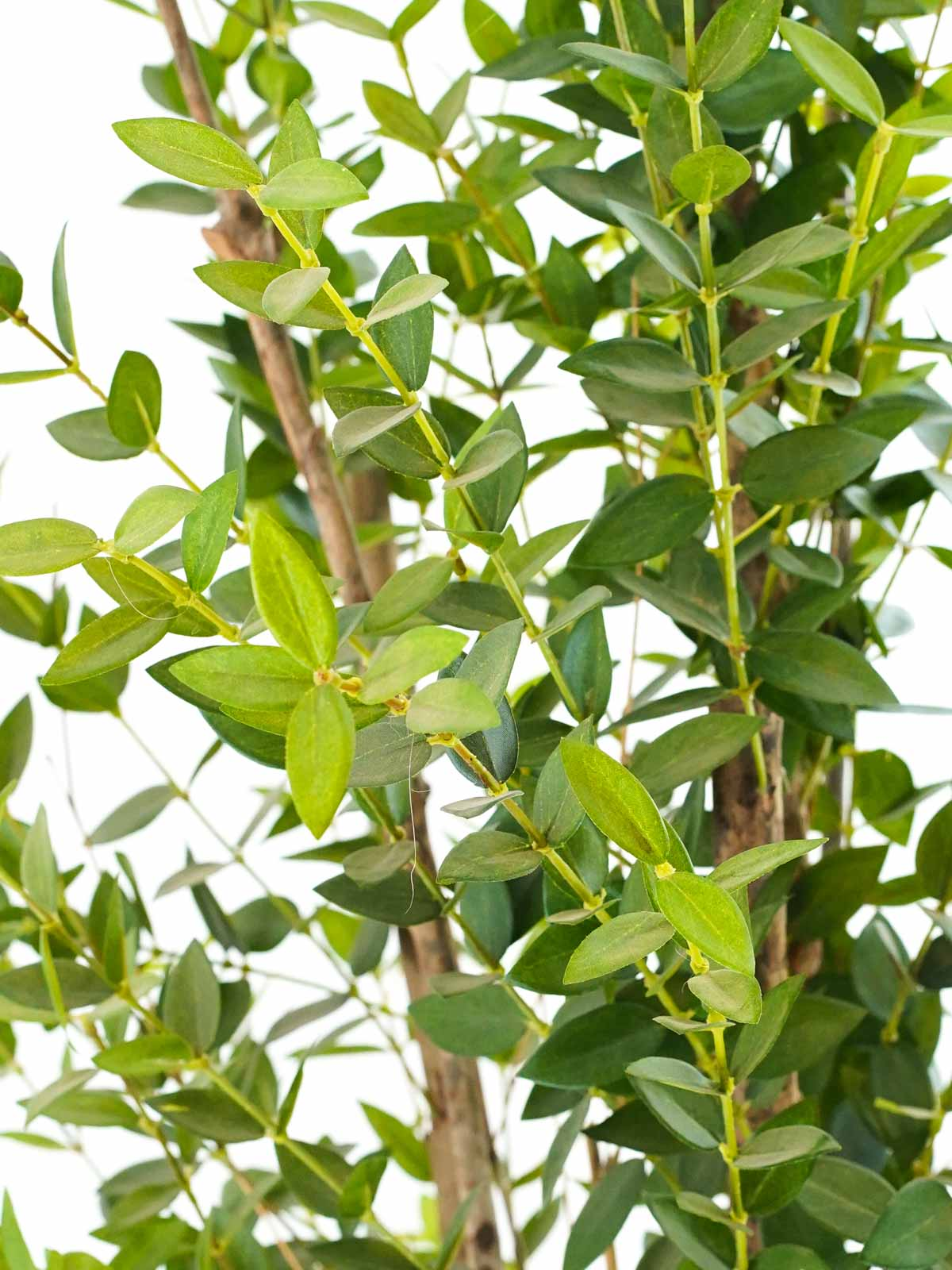 Meucalyptus Tree Small Artificial Plants Trees