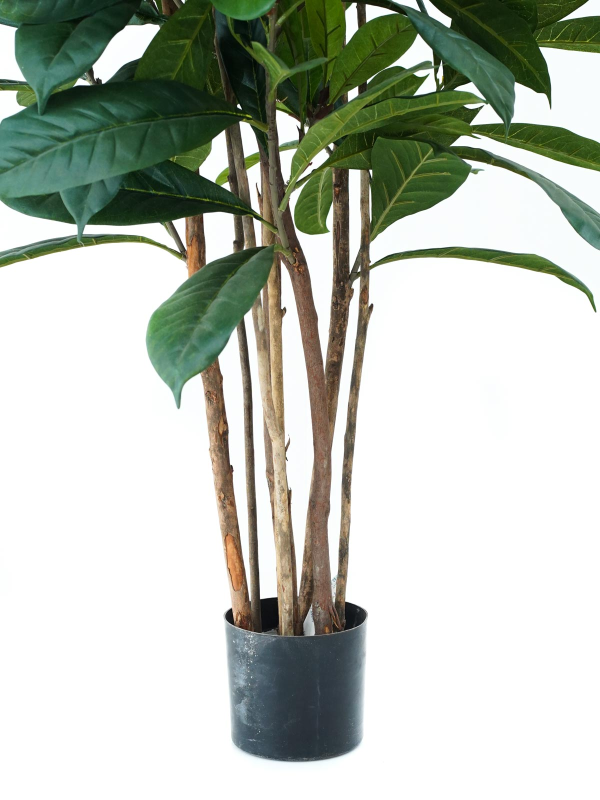 Ficus Cyathistipula Tree (Med) Artificial Plants Trees