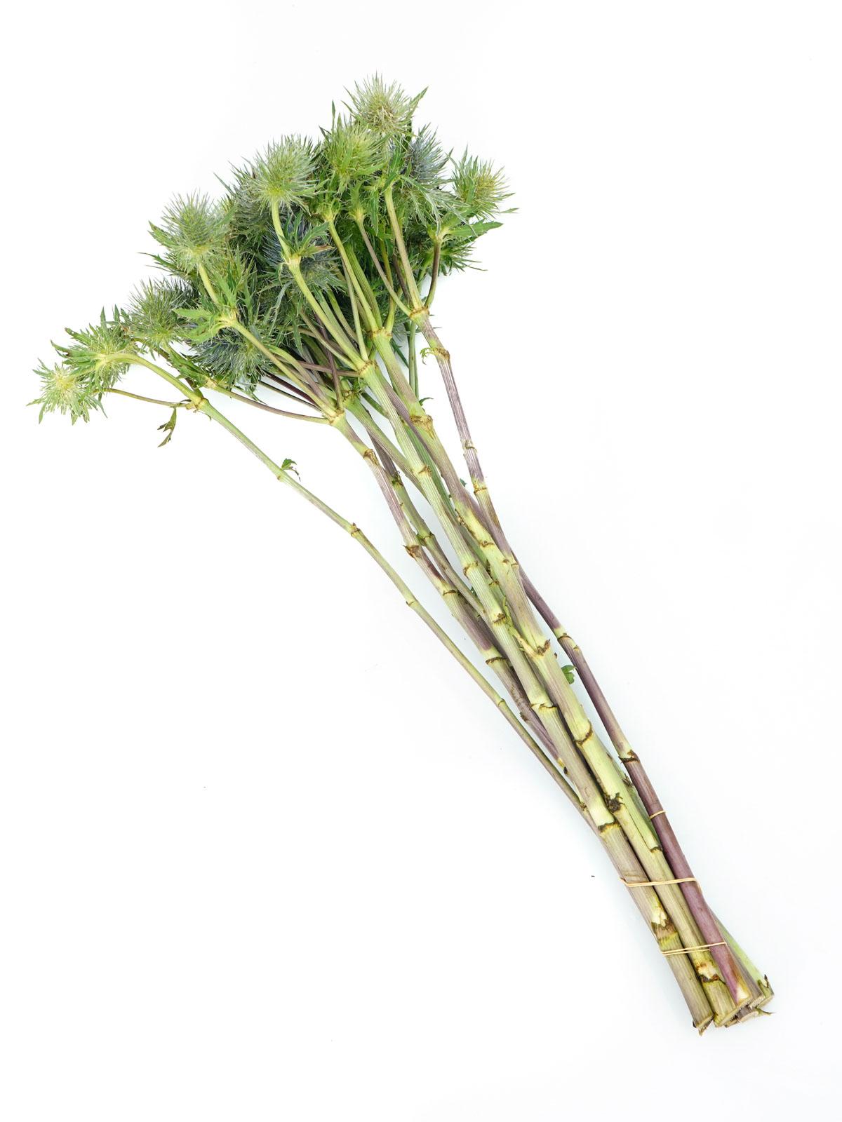 ارنجيوم أخضر  الزهور بالجملة زهور مقطوفة