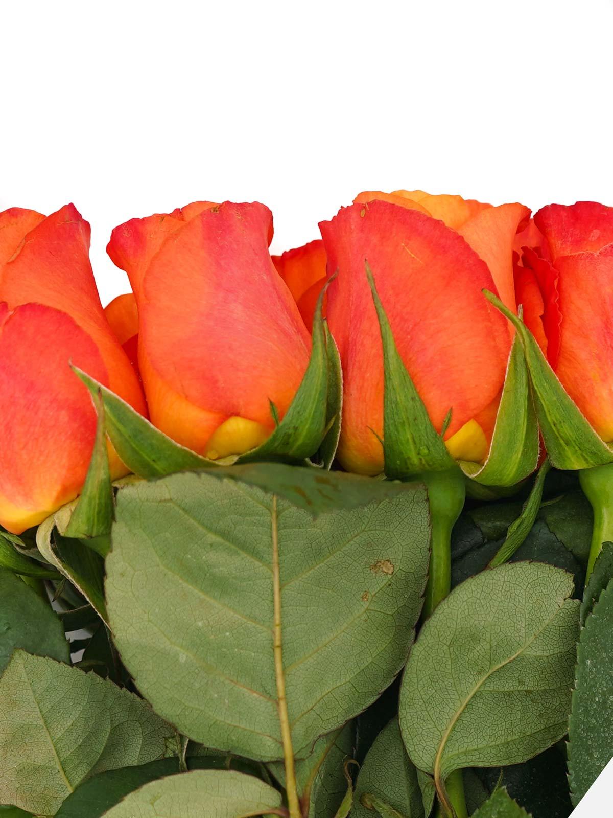 زهور برتقالي ' الزهور بالجملة زهور مقطوفة