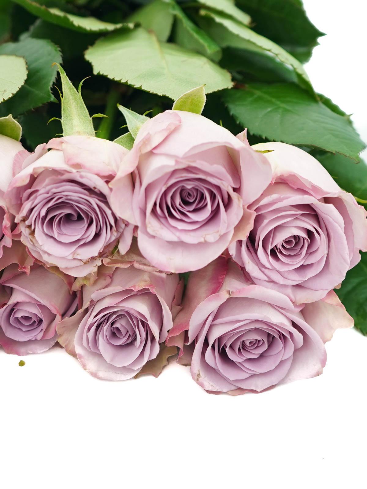 زهور بنفسجي ' الزهور بالجملة زهور مقطوفة