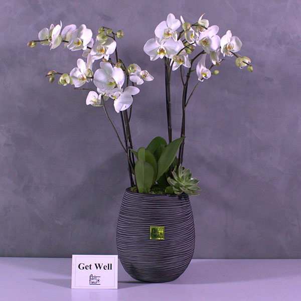 Capiplanteregg Premium Collection Flowering Plants