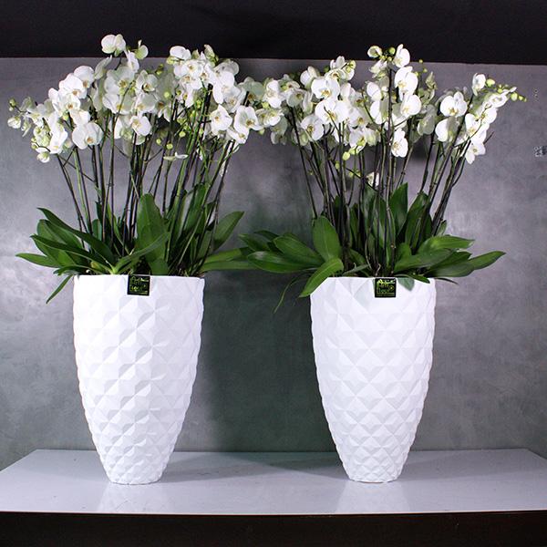 Capiplanter 'Premium Collection Office Plants