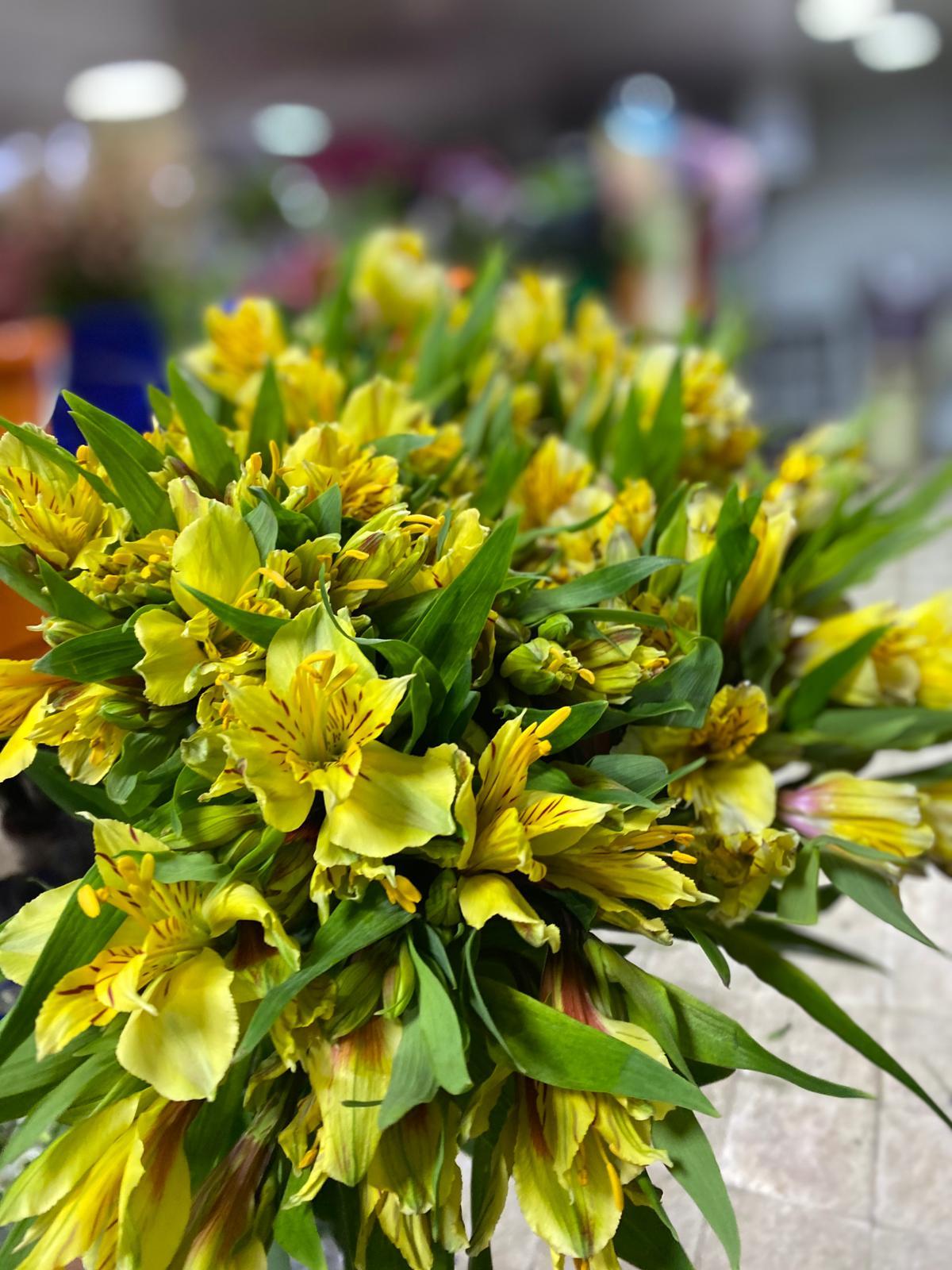 Alstroemeria Yellow Wholesale Flowers Cut Flowers