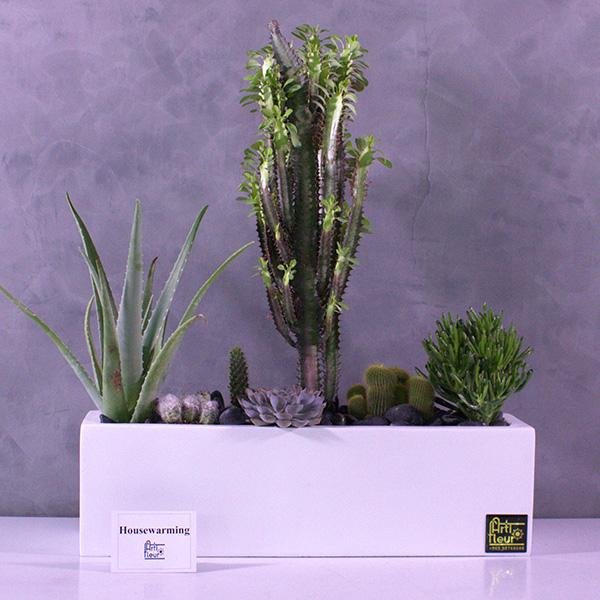 Cactus garden Office Plants Plant Arrangement