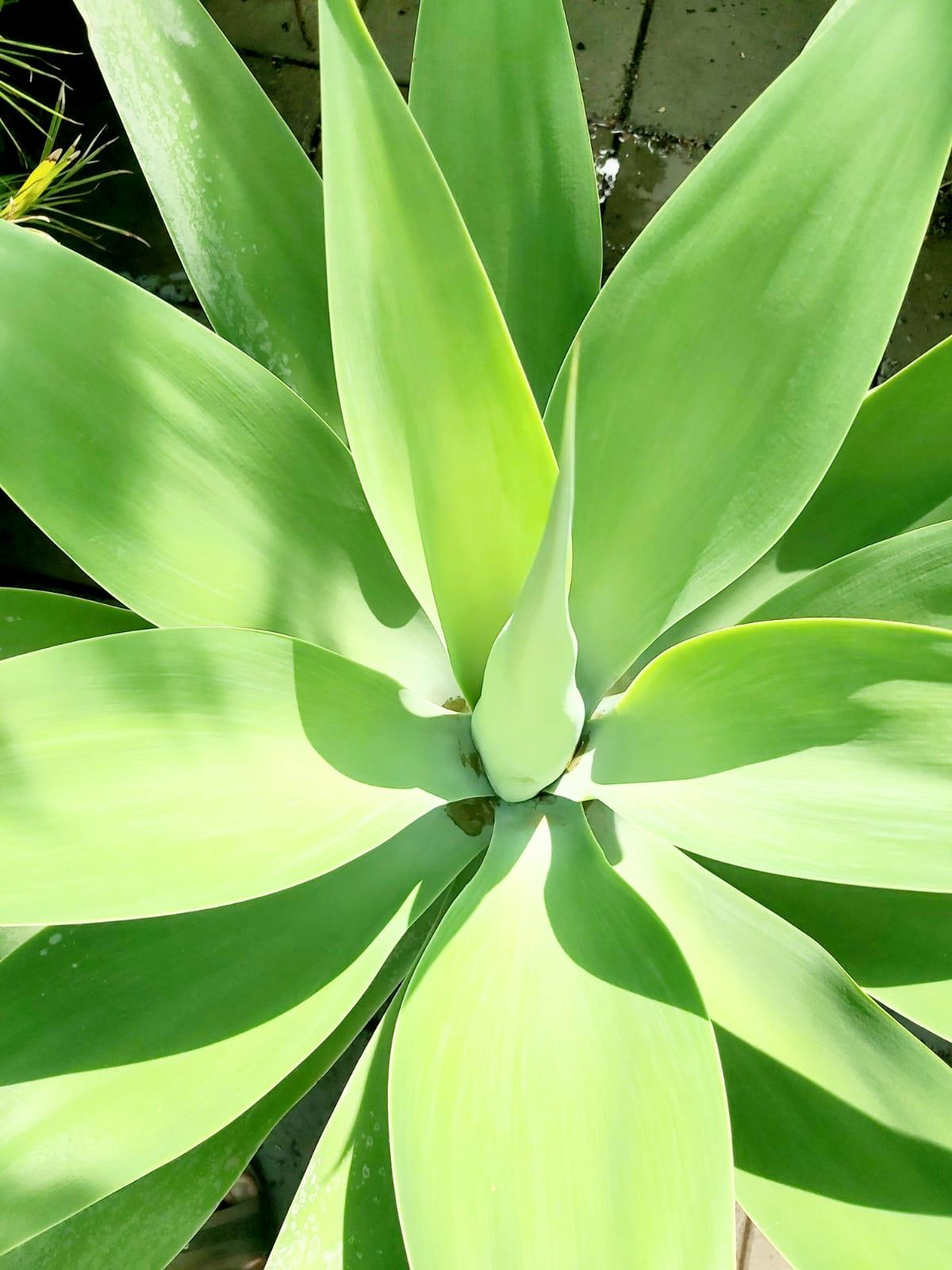 صبار نباتات خارجية اشجار