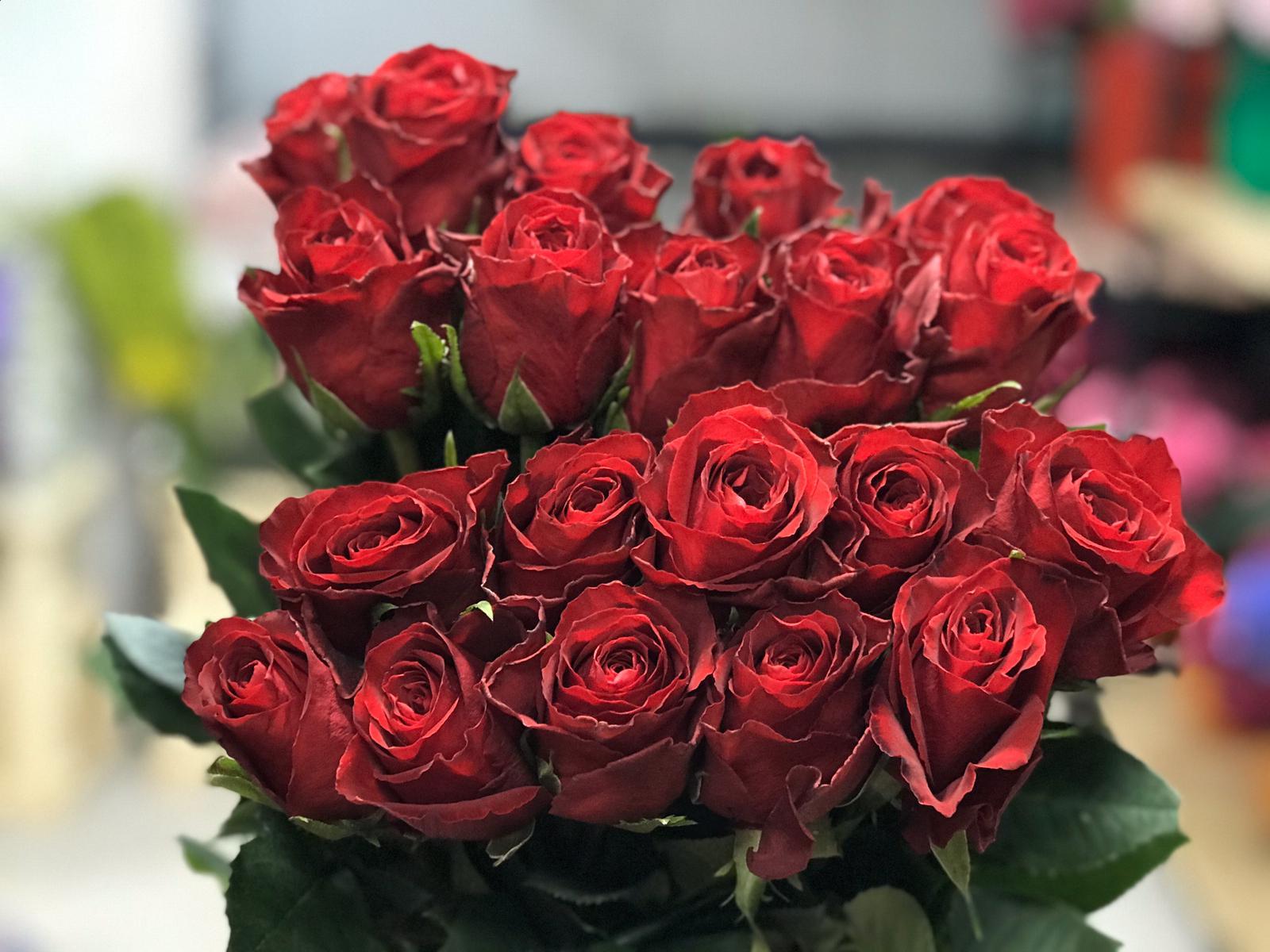 ورد - أحمر  الزهور بالجملة زهور مقطوفة