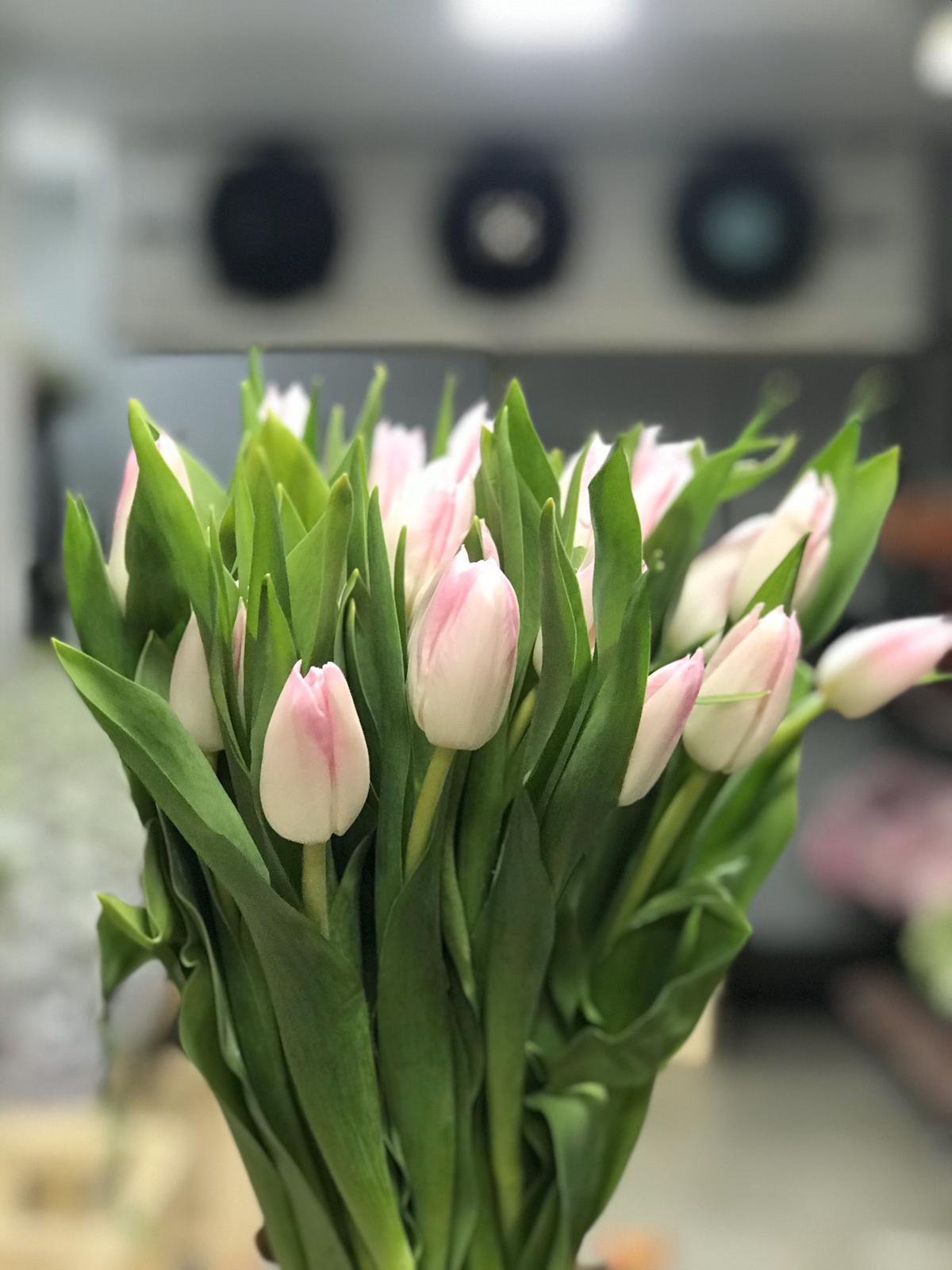 Tulip Litch Pink Wholesale Flowers Cut Flowers
