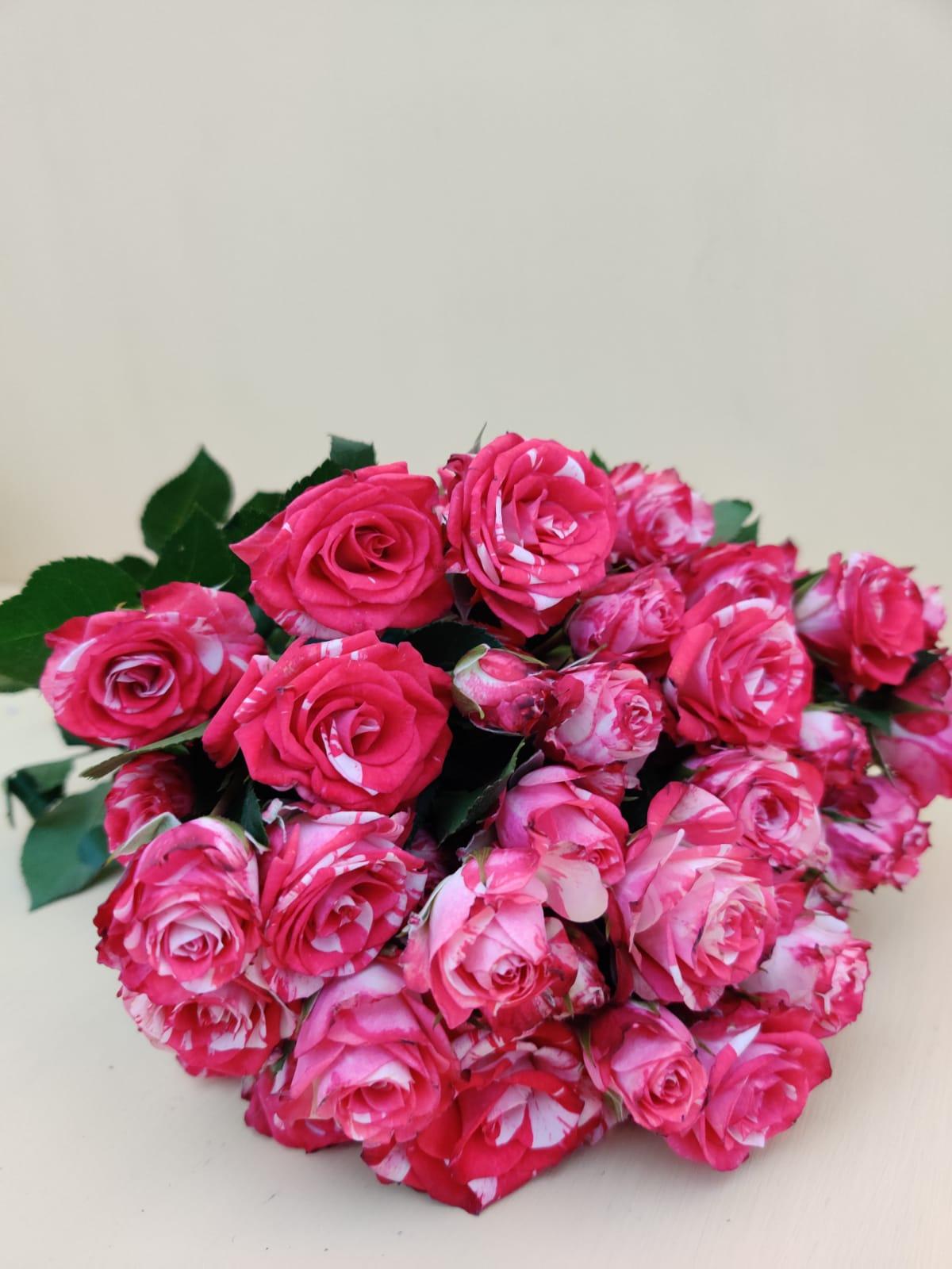 سبراي روز - وردي  الزهور بالجملة زهور مقطوفة