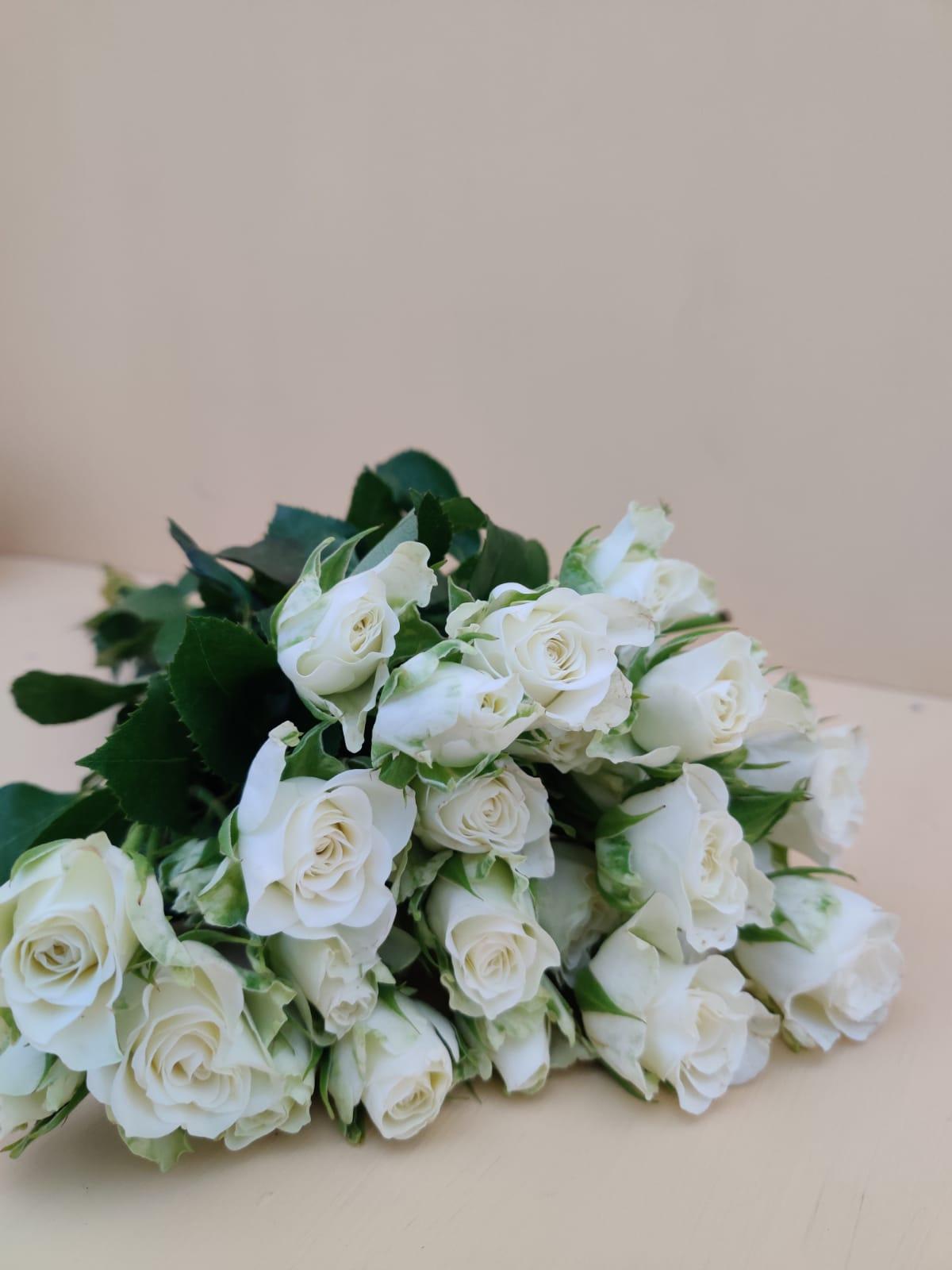 سبراي روز - أبيض  الزهور بالجملة زهور مقطوفة