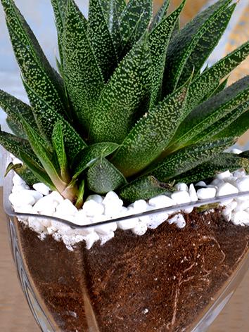 charming Succulents  Office Plants Plant Arrangement