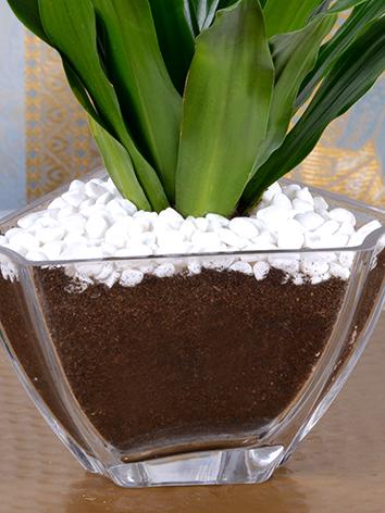 glory  Office Plants Plant Arrangement