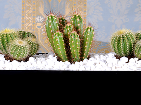 Modern Succulent Office Plants Plant Arrangement