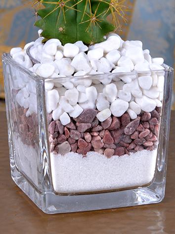 spikes Office Plants Plant Arrangement