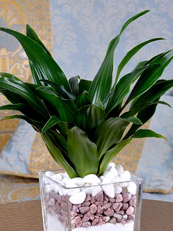 Modern Office Plant Office Plants Plant Arrangement