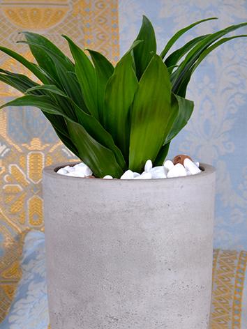 Concrete Plant  Office Plants Plant Arrangement