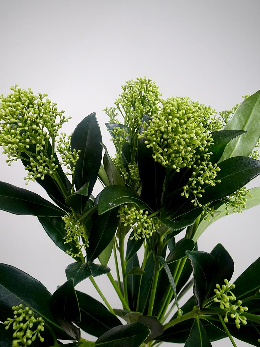 سكيما - أخضر  الزهور بالجملة زهور مقطوفة