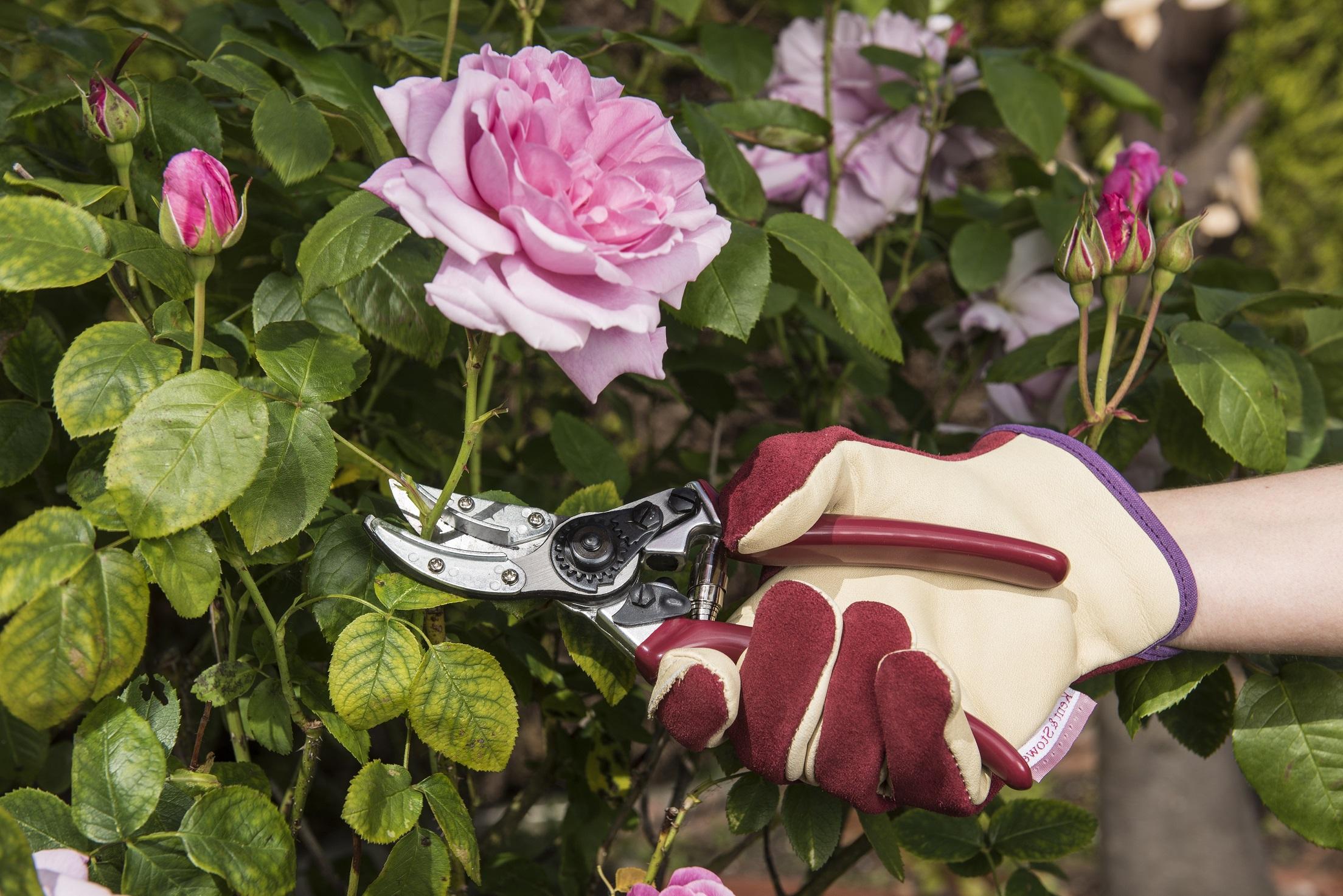 KS Rose 'Cut & Hold' Secateurs 'اكسسوارات للزراعة أدوات يدوية