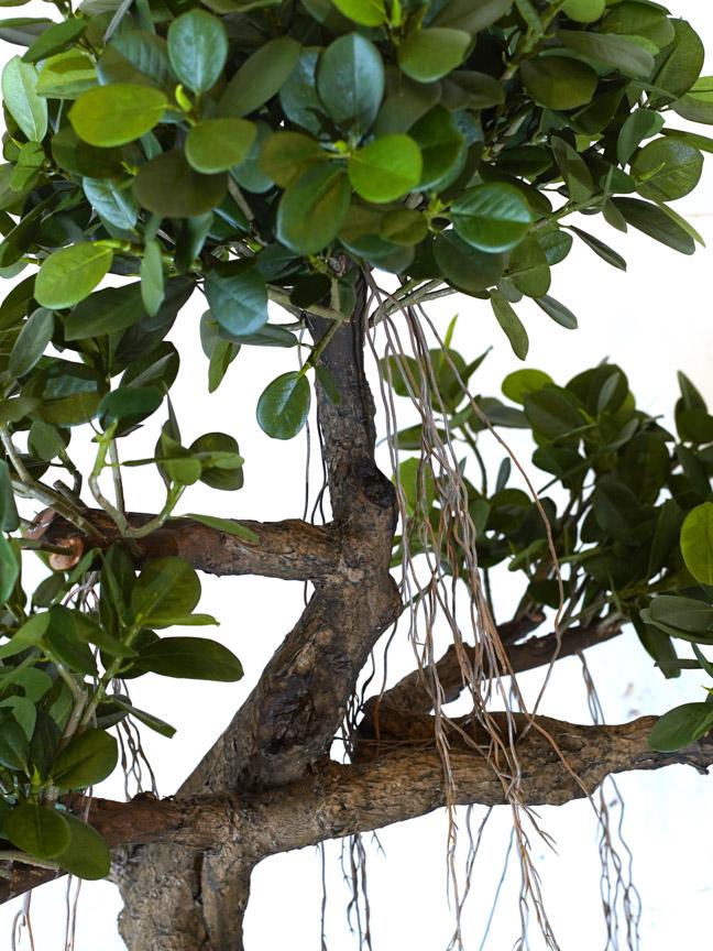 شجرة تين الباندا 'نباتات اصطناعية أشجار