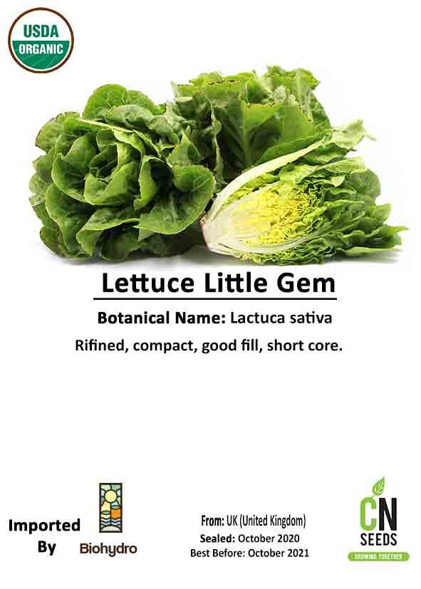 Lettuce Little Gem Seeds Fruits and Vegetables