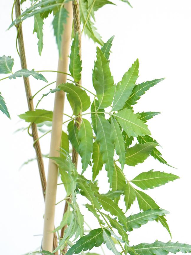 نيم نباتات خارجية أعشاب