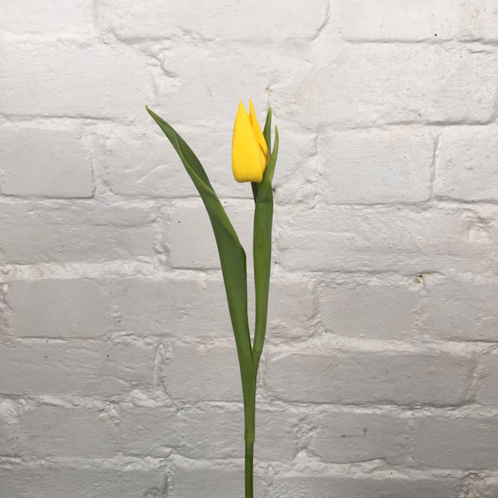 Tulip Bright Yellow  Wholesale Flowers Cut Flowers