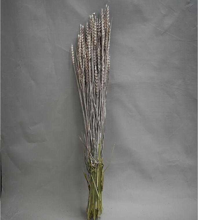 قمح مصبوغ - بلاتينيوم  الزهور بالجملة ورود مجففة