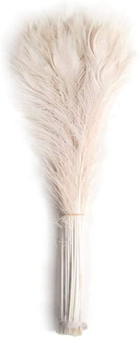 bleached peacock feathers  Wholesale Flowers Dried Flowers
