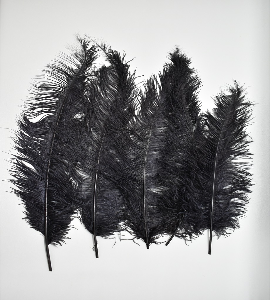 Ostrich feather - black Wholesale Flowers Dried Flowers