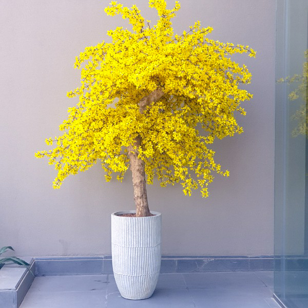 الشجرة الصفراء نباتات اصطناعية أشجار