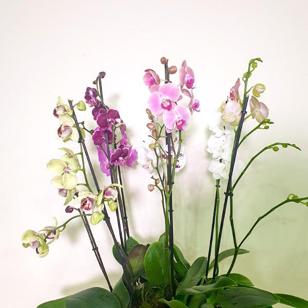 متعدد الألوان # 1 التشكيلة الفخمة نباتات للمكتب