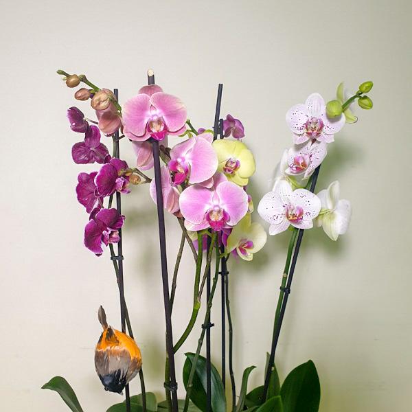 لون شرقي التشكيلة الفخمة نباتات للمكتب