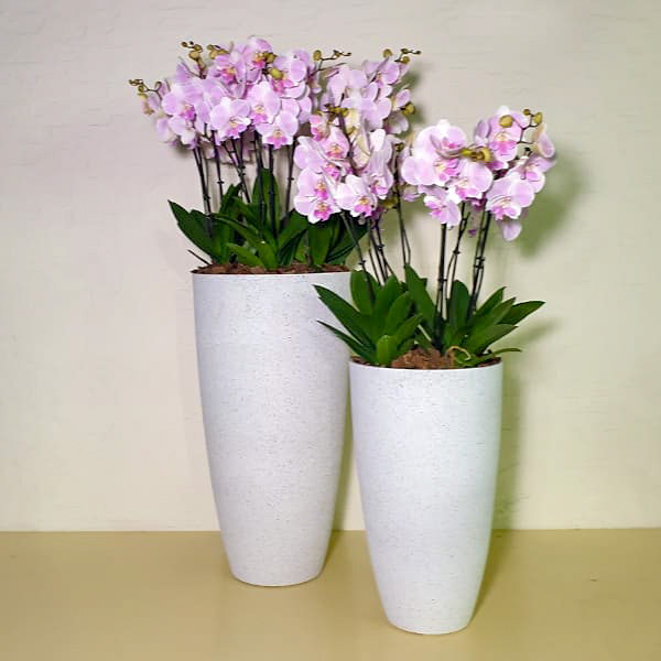 White Towers 11 Premium Collection Office Plants