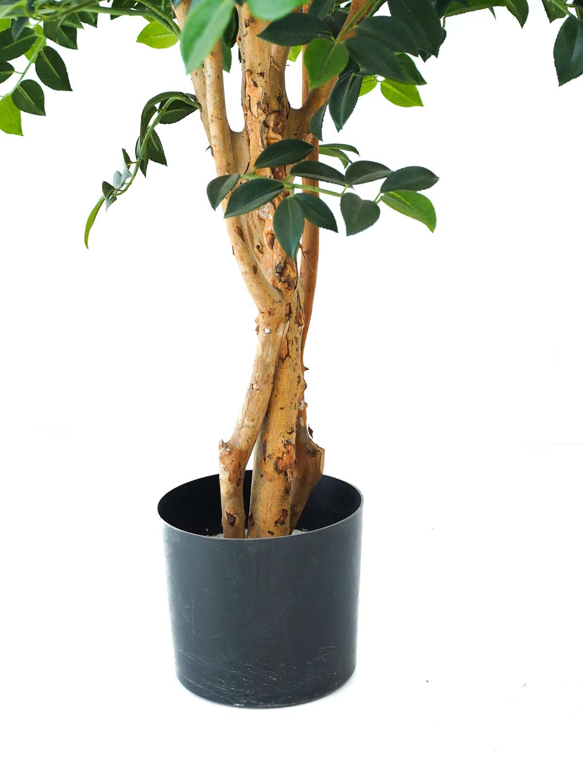 Sazanka Tree Medium Online