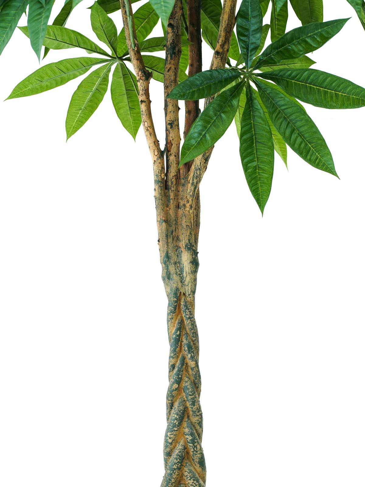 Pachira Braid Tree Large Online