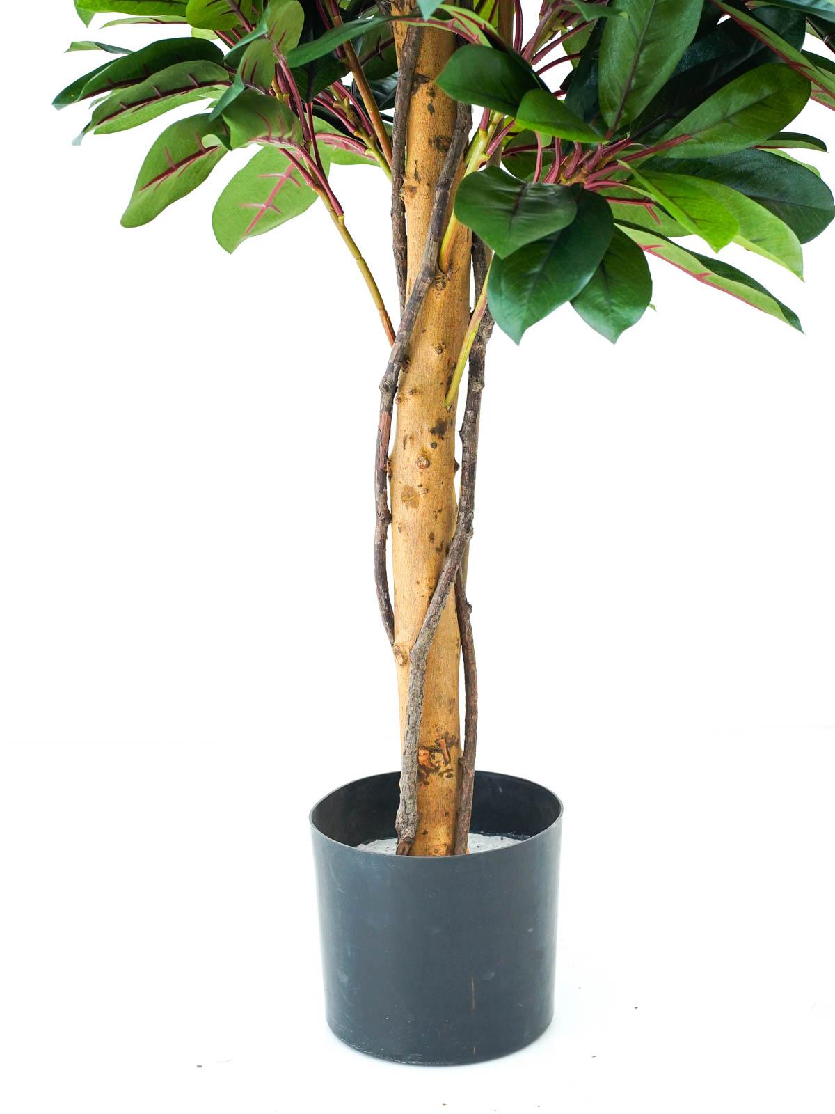 Red Lady Schefflera Natural Tree Medium Online