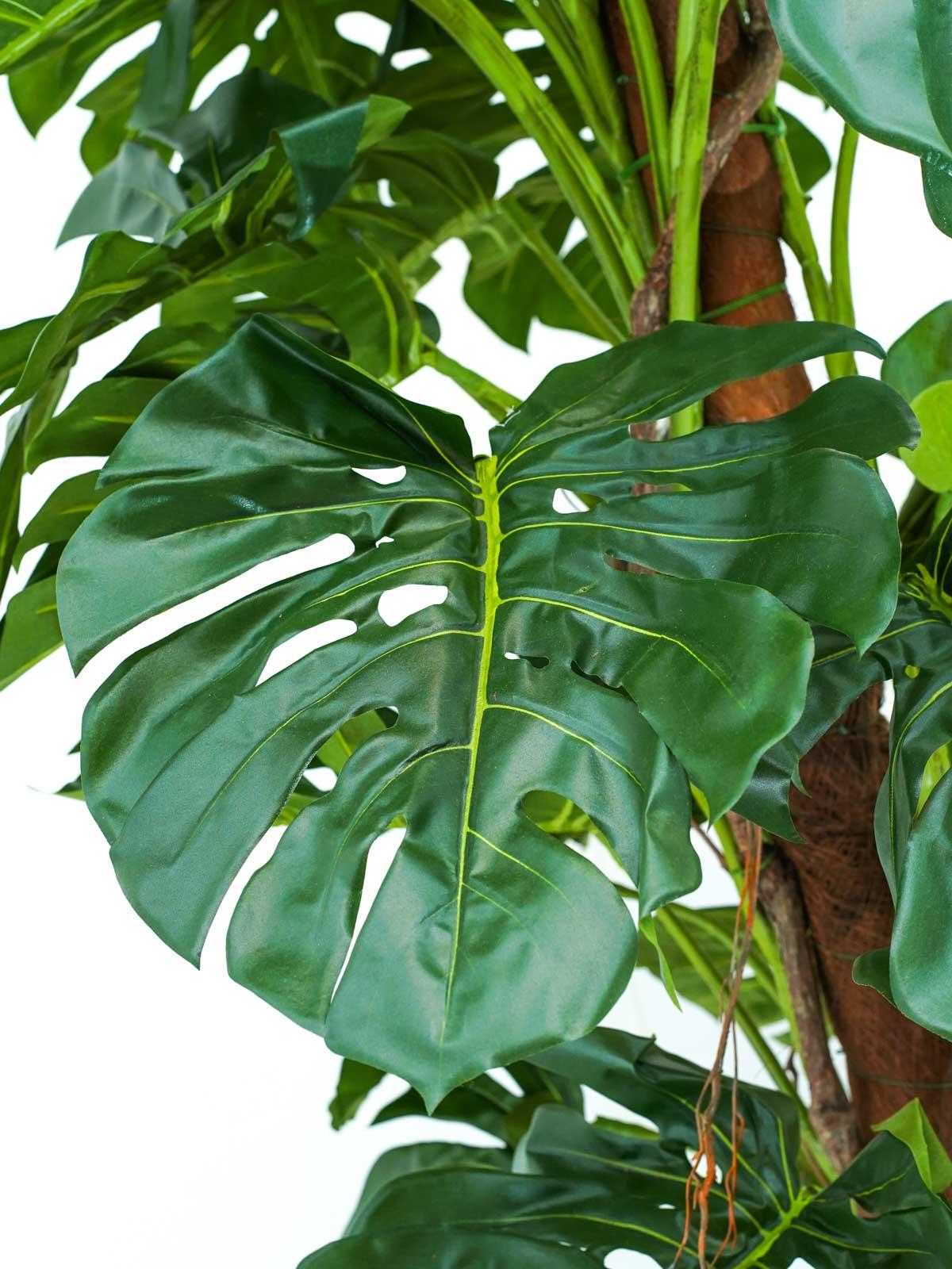 A Split Philo On Pole Tree Large Online