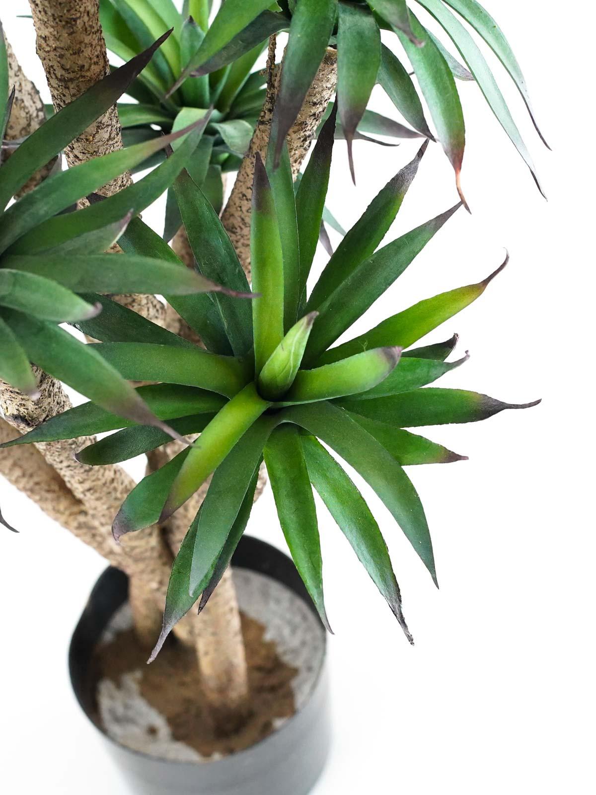 Agave Tree Medium Online