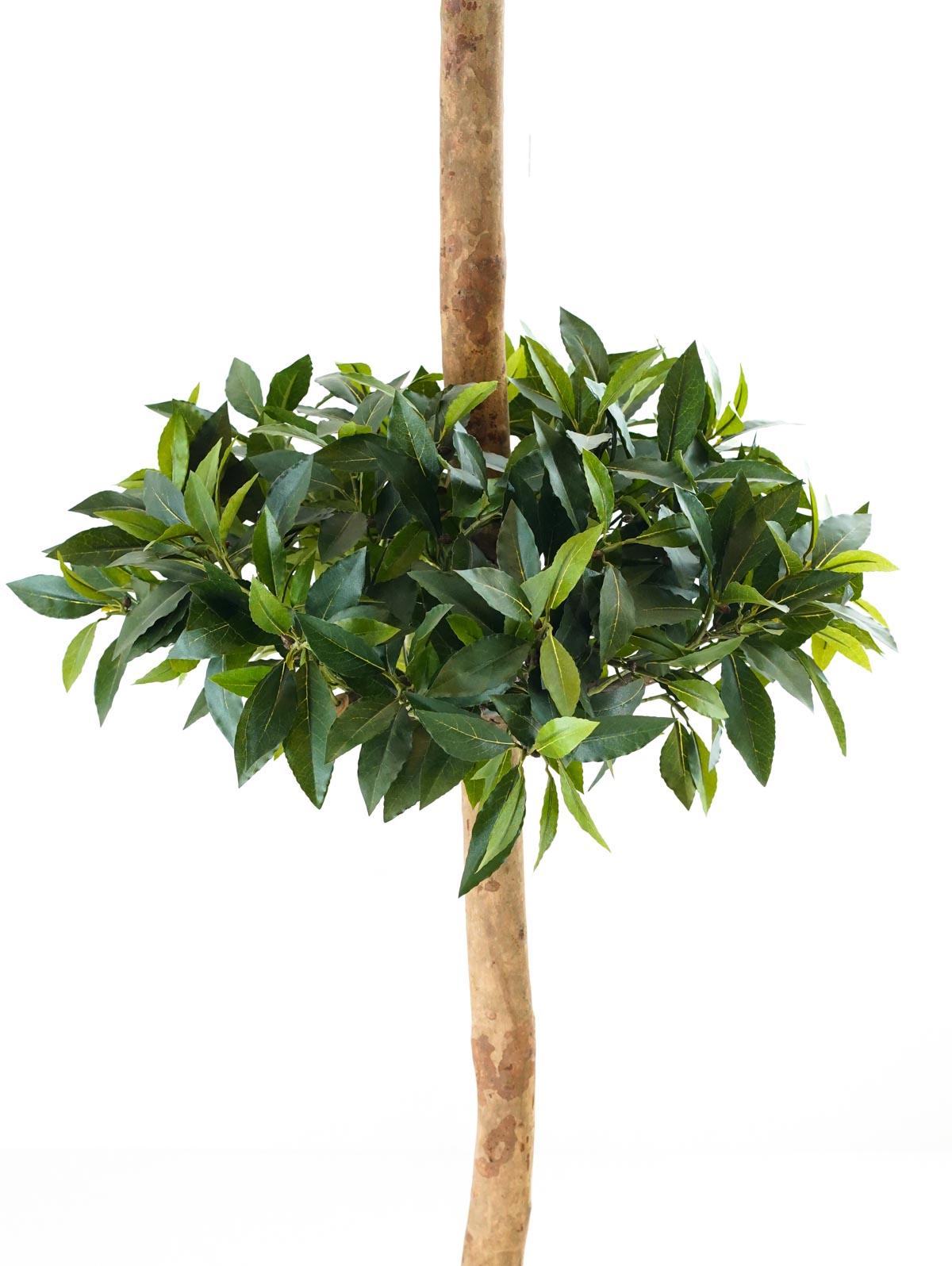 شجرة سويت باي بول - كبير Online