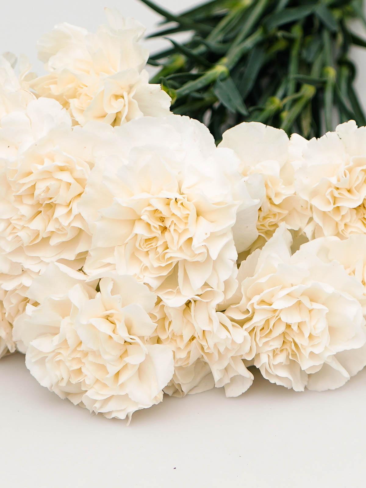 Carnation White Online