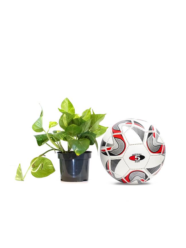 Epipremnum Table Plants Online