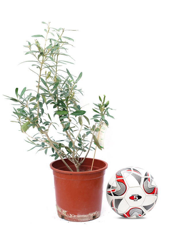 Olive Bushy Small Online