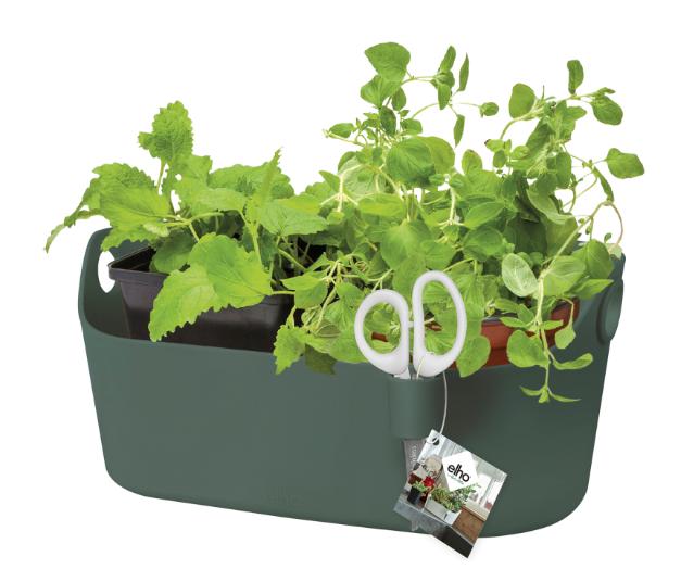 Brussels Herbs Station Green Online