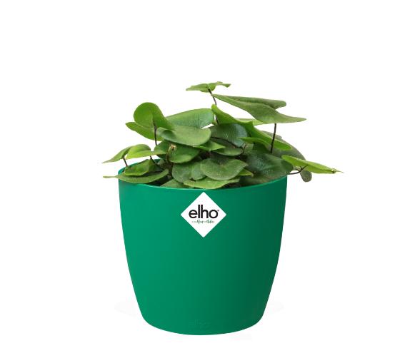 Brussels Round Mini Pot - Green Online