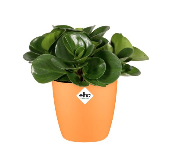Brussels Round Mini Pot - Orange Online