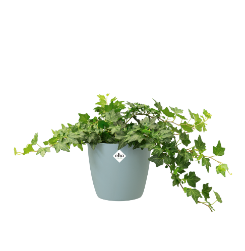 Brussels Round Pot - Mint Online