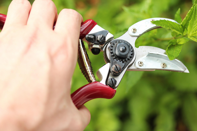 KS Rose 'Cut & Hold' Secateurs Online